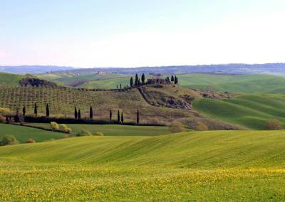 Tuscan Fitness - Area