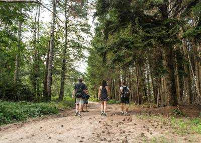 Tuscan Fitness Forest Hiking