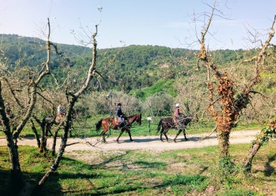 Horse riding, tennis courts, hiking trails and more